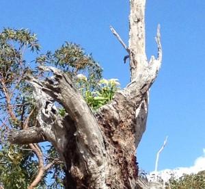 golf-tree